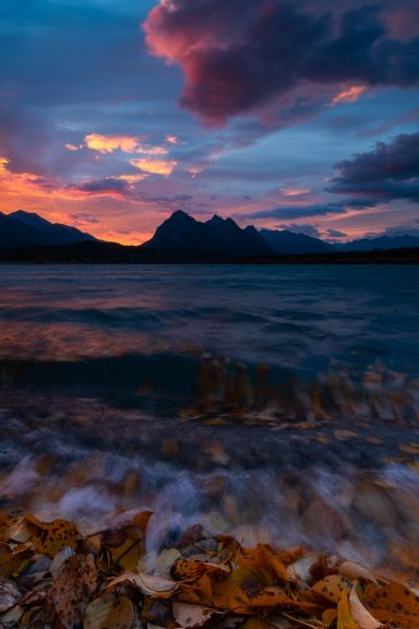 Sunrise colours the sky above Abraham lake with small waves and fallen leaves on the shore