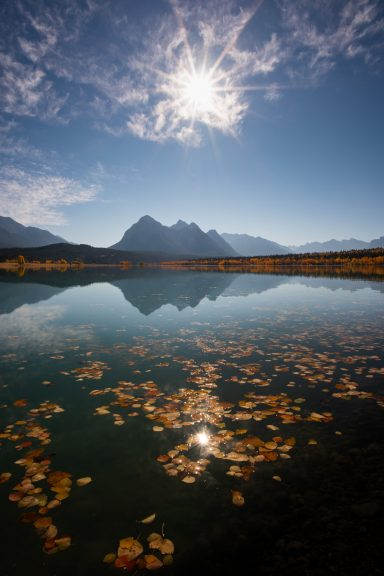 Sunburst over Ex Coelis reflecting in Abraham Lake with fall leaves floating