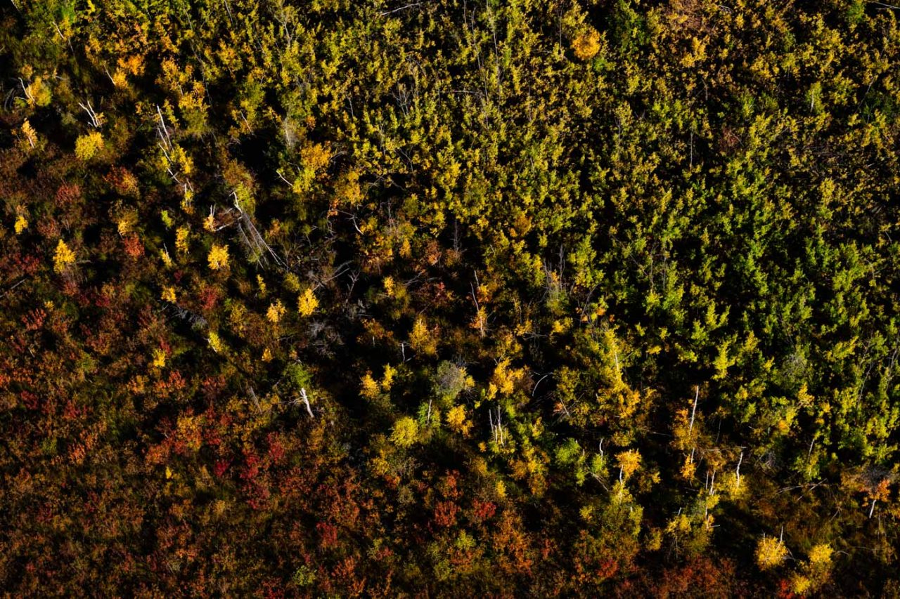 Aerial image of fall colours in Northern Alberta