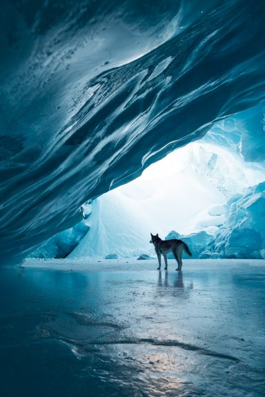A husky stands in a massive ice cave in the Canadian Rockies