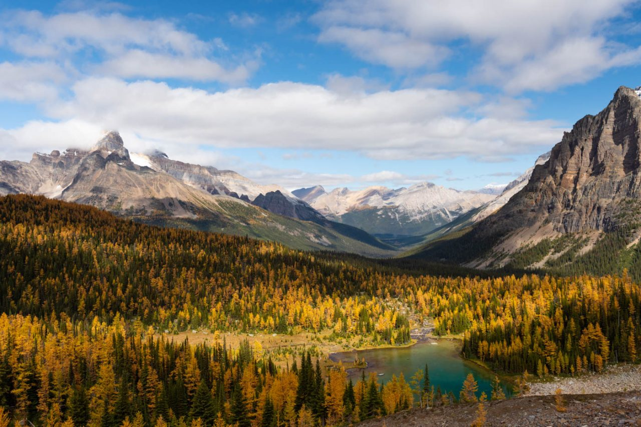 Jewel colored lake surrounded by Larches and mountains