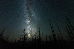 Silhouettes of burned trees frame the Milky Way in British Columbia