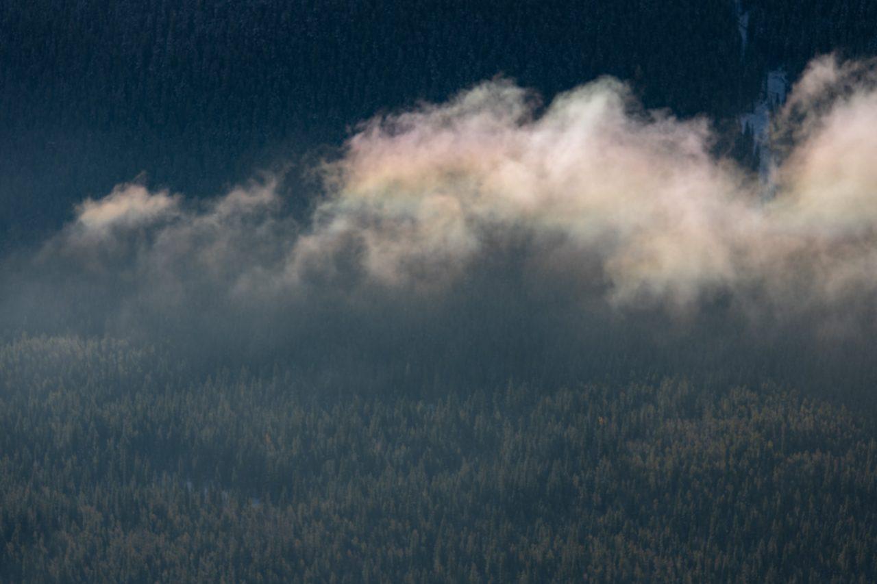 Iridescent cloud drifting over trees