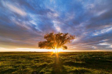 Sunburst through tree at sunset in Southern Alberta