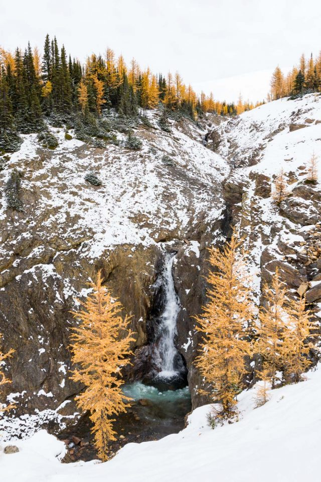 Winter scene of waterfall and yellow larches, Mount Assiniboine Provincial Park