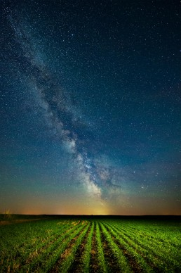 Tiny wheat plants growing in rows under the Milky Way, Alberta Agriculture