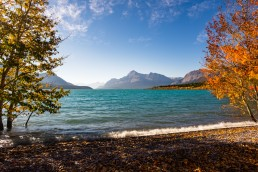 Turquoise waters of Abraham Lake framed by fall coloured trees along a rocky shoreline