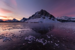 Frost flowers on ice at Bow Lake during a pink and purple winter sunrise.