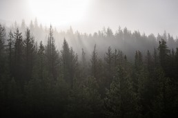 Sunlight pierces through mist and layers of trees in Jasper National Park