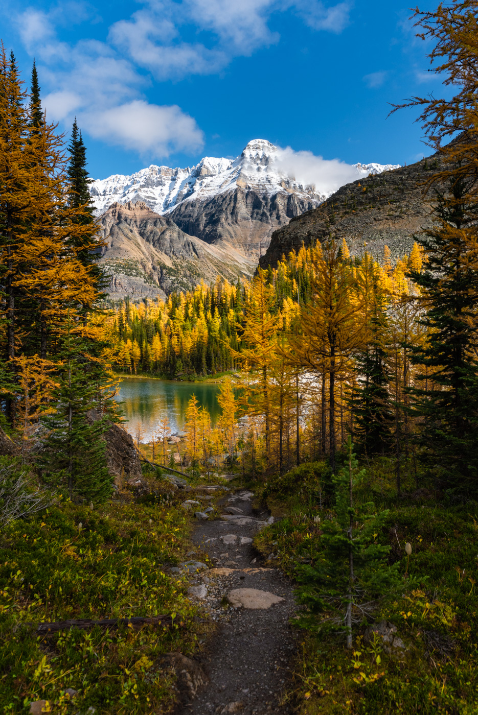 A hiking trail leading through larches to Schaffer Lake in Yoho National Park